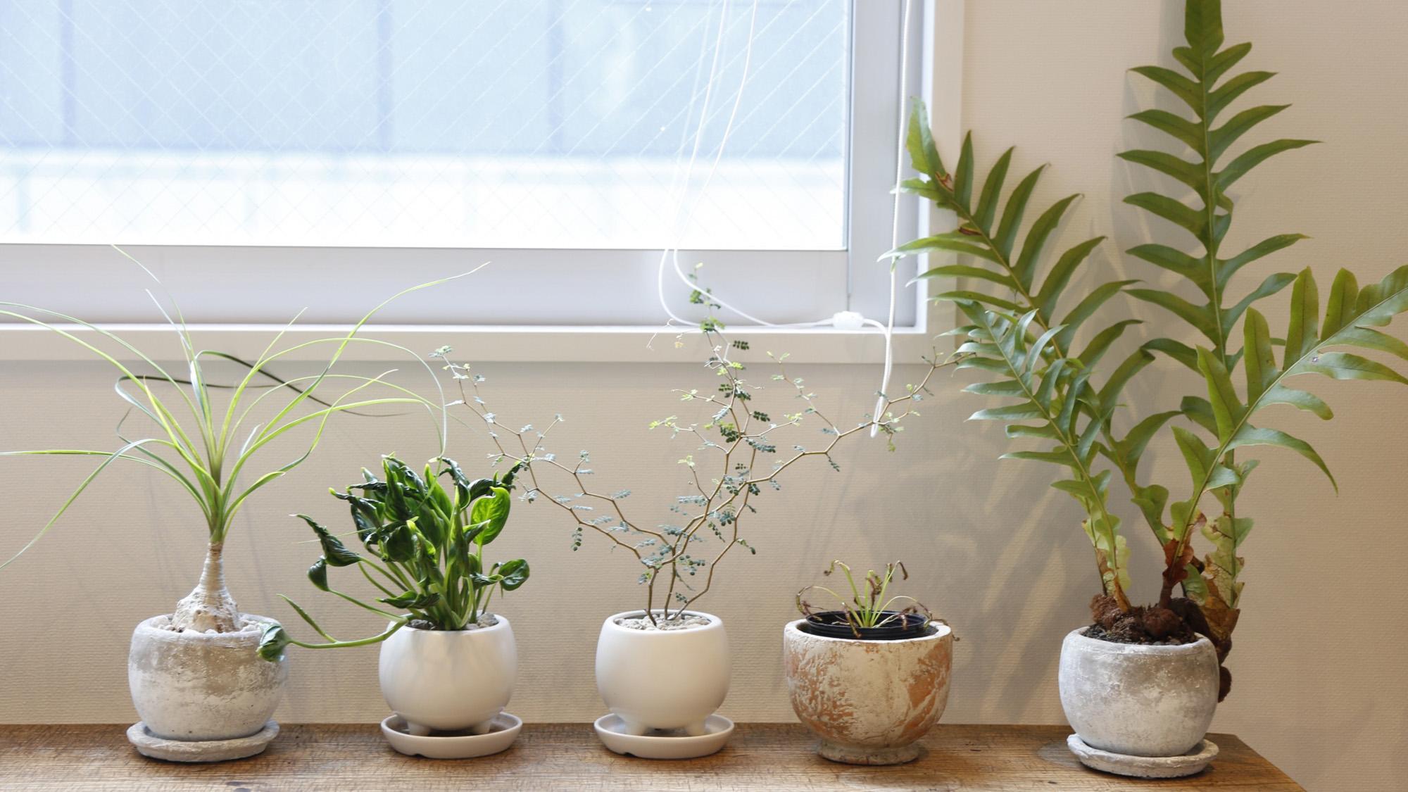 室内向け観葉植物でマンションライフに彩りを!室内観葉植物の選び方